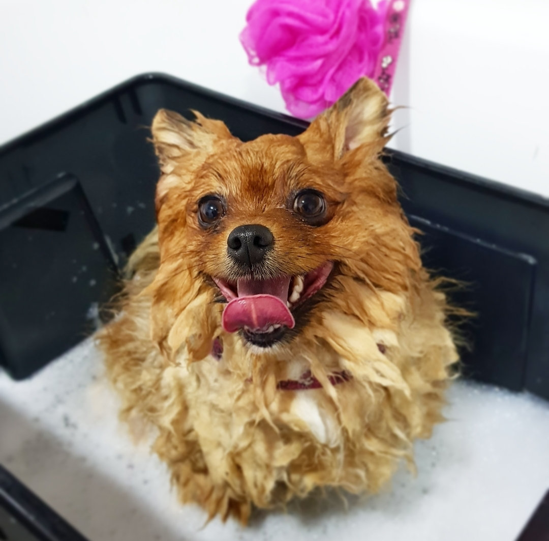 Beauty Bath (Small Breeds max.10kg)