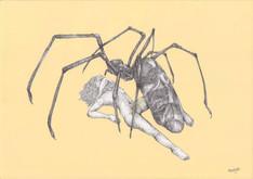 bugslife.spider.jpg
