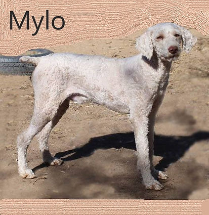 mylo.jpg