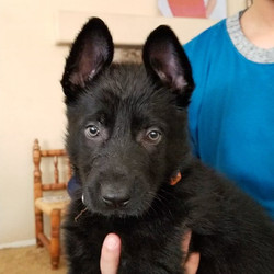 20200328_153009_capture_edited