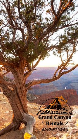 Grand Canyon & Tree, Mobile Wallpaper.pn