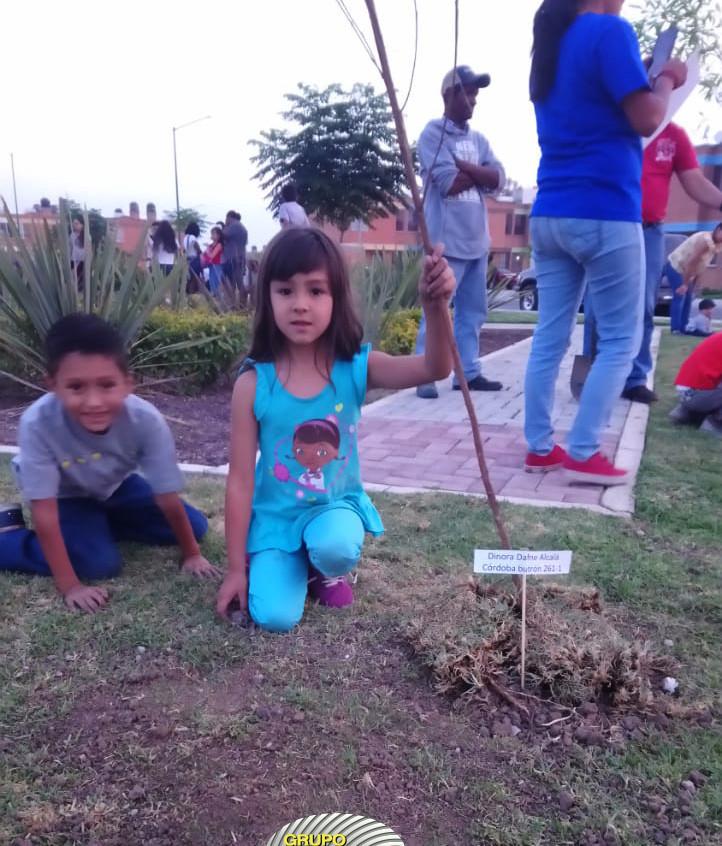 Reforestación_5