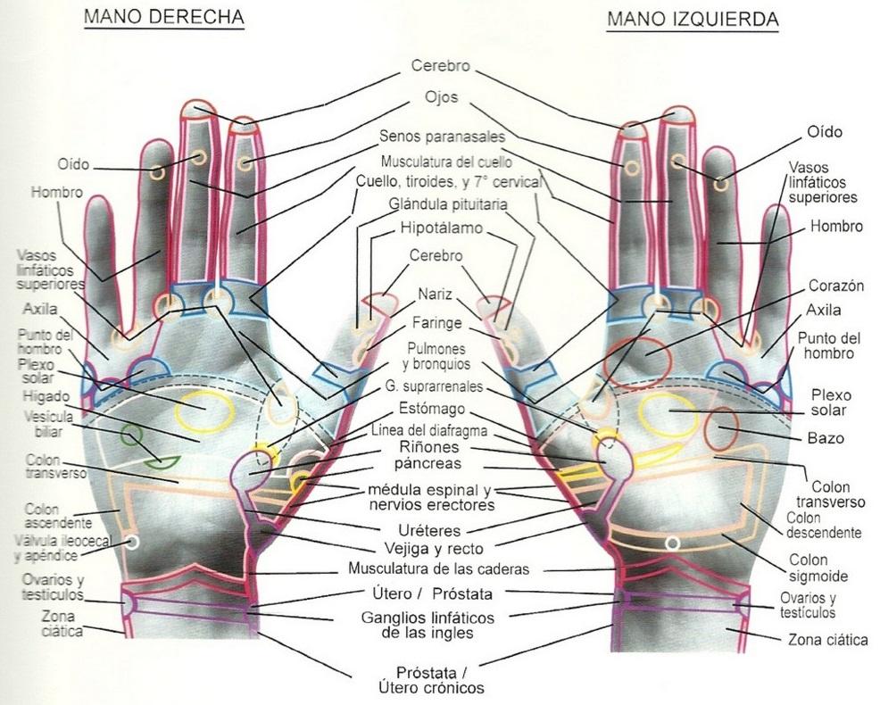 reflexología_manos