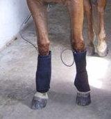 Equine Dual Leg Wrap