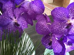 orchidée fleurs  montpellier