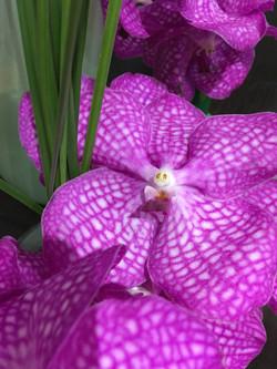 orchidée fleuriste montpellier