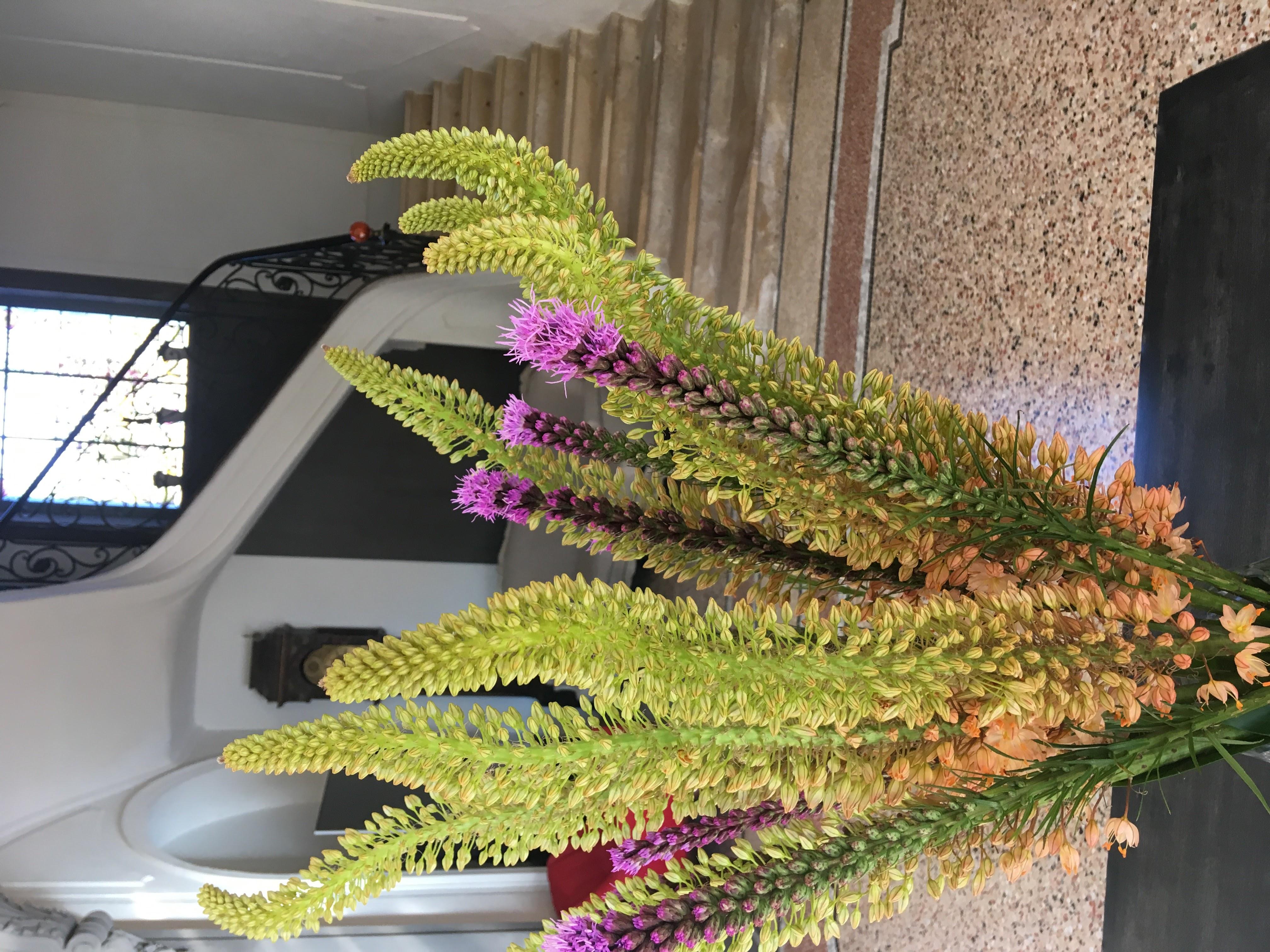 fleurs accueil