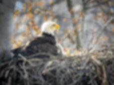 EagleSnuggles_resized.jpg