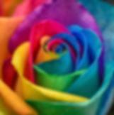 RainbowRose_Resized.jpg