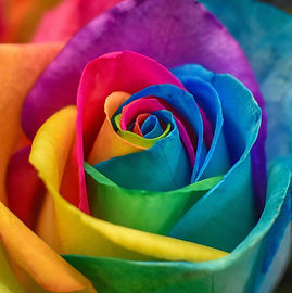 RainbowRose_Resized.jpg