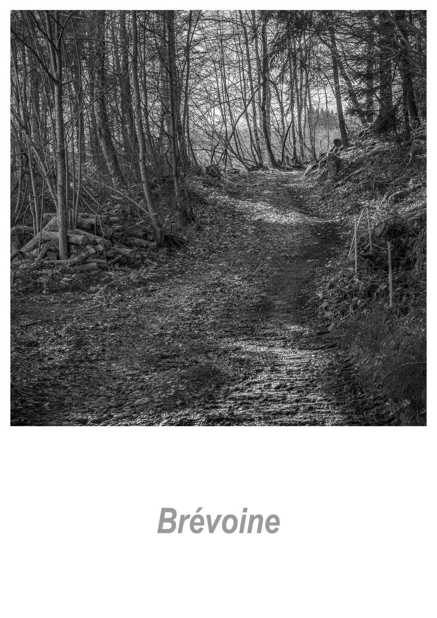 Brévoine_1.4w.jpg