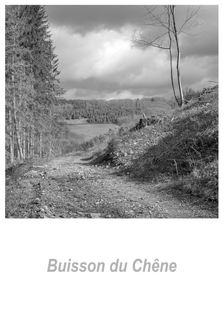 Buisson_du_Chêne_1.1w.jpg