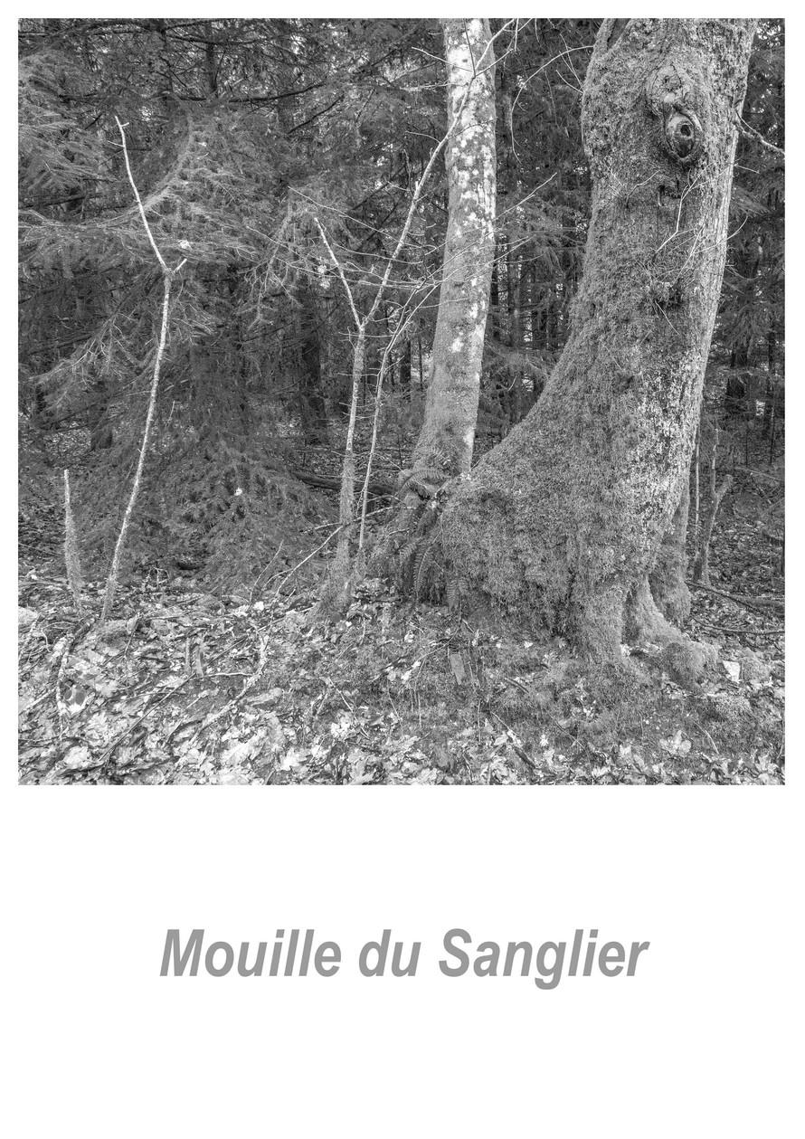 Mouille du Sanglier 1.5w.jpg