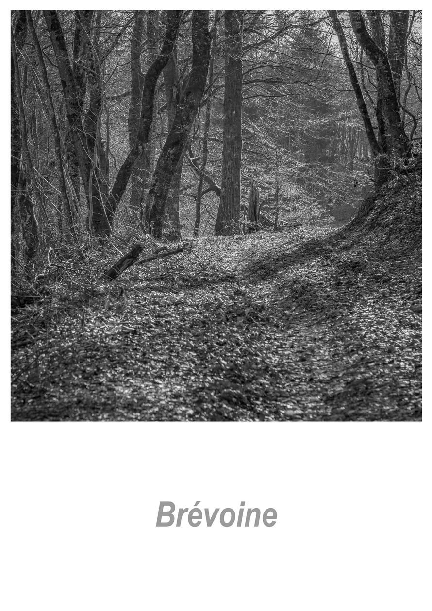 Brévoine_1.1w.jpg
