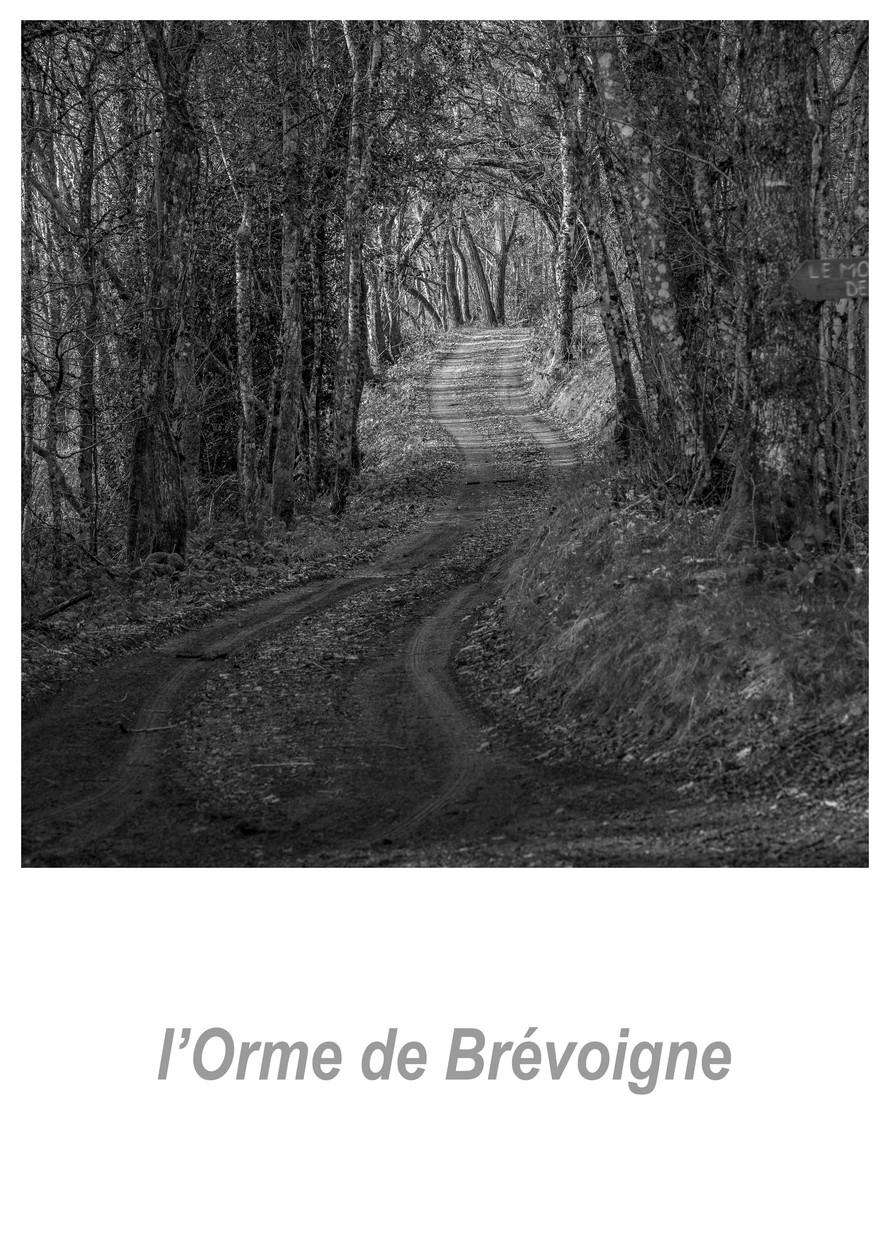 l'Orme de Brévoigne 1.5w.jpg