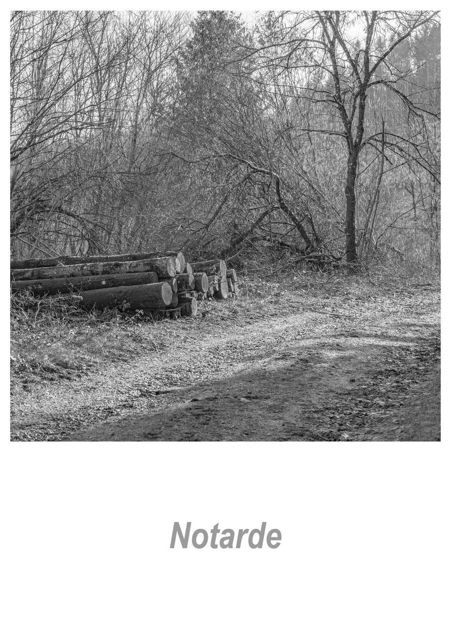 Notarde 1.6w.jpg