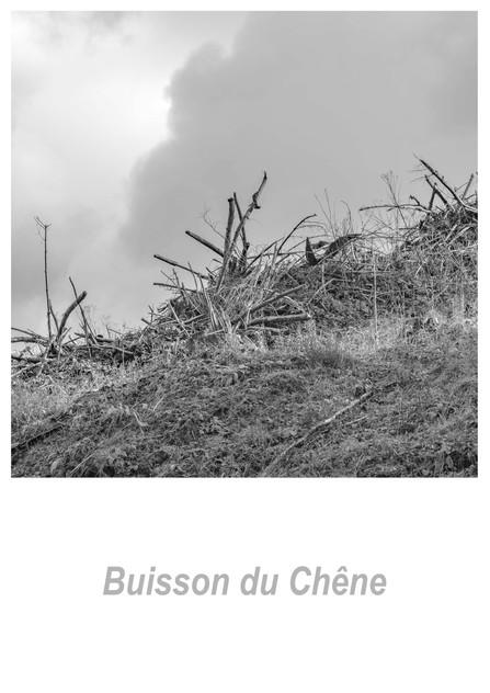 Buisson_du_Chêne_1.3w.jpg