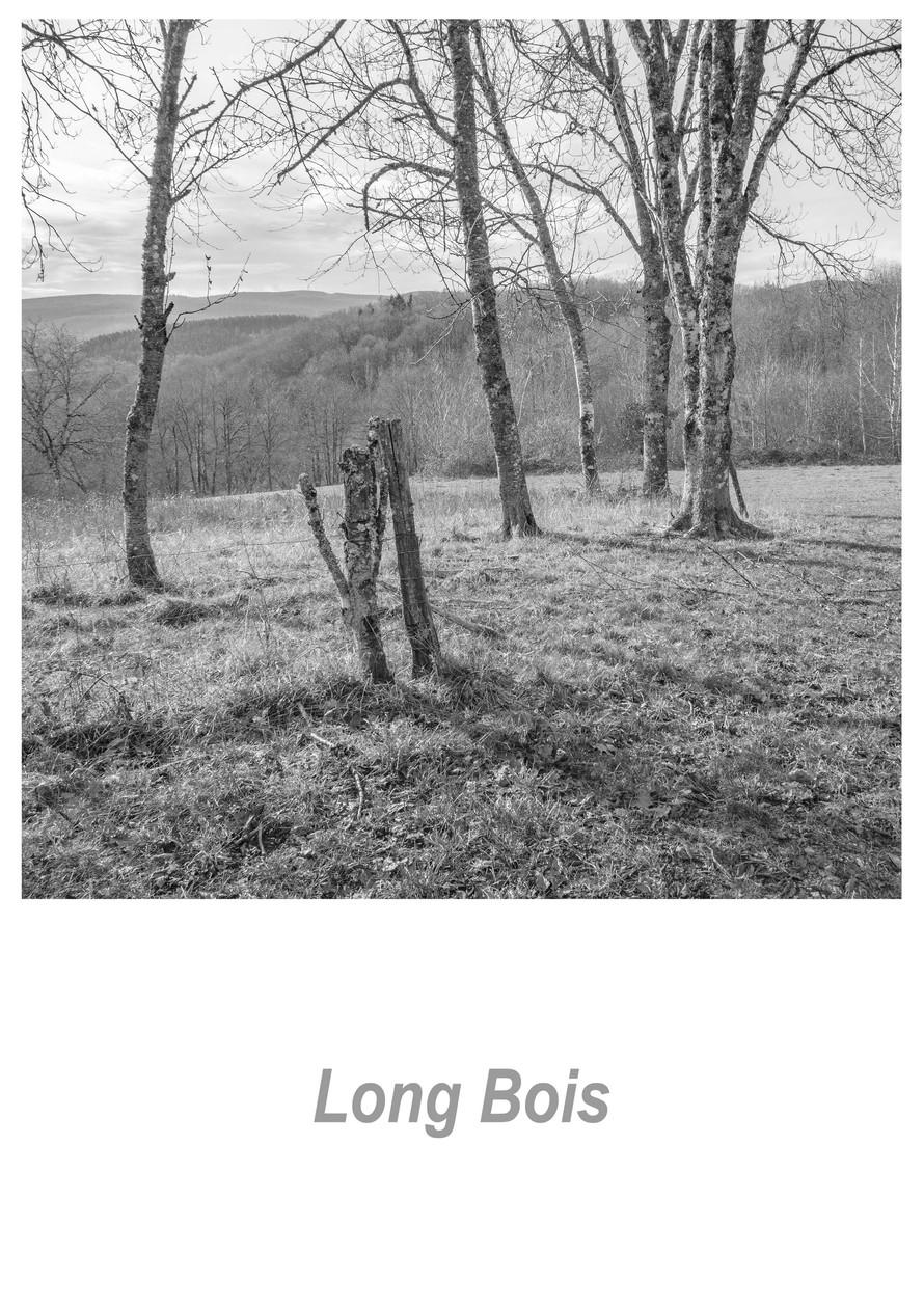 Long Bois 1.1w.jpg