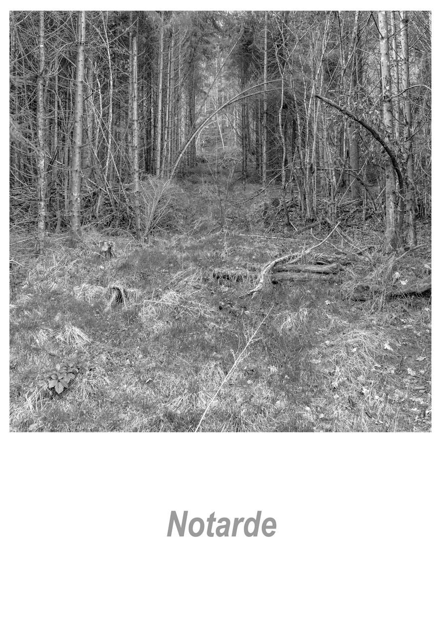 Notarde 1.7w.jpg