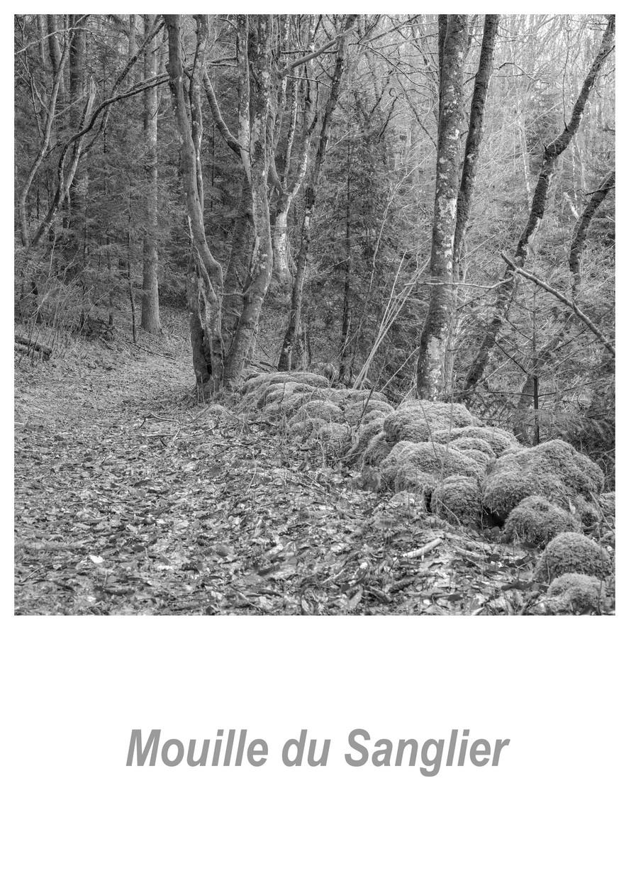 Mouille du Sanglier 1.2w.jpg