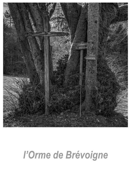 l'Orme de Brévoigne 1.7w.jpg