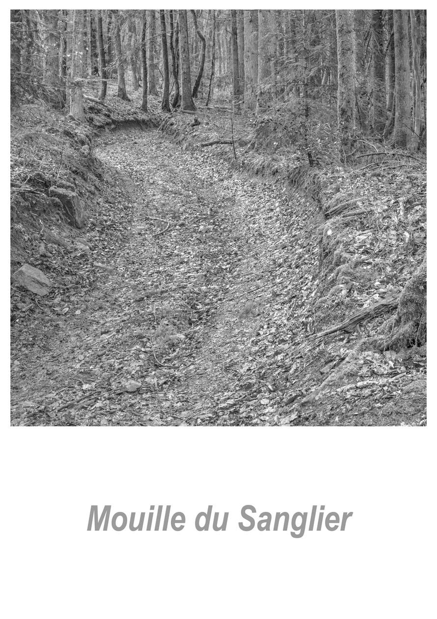 Mouille du Sanglier 1.1w.jpg