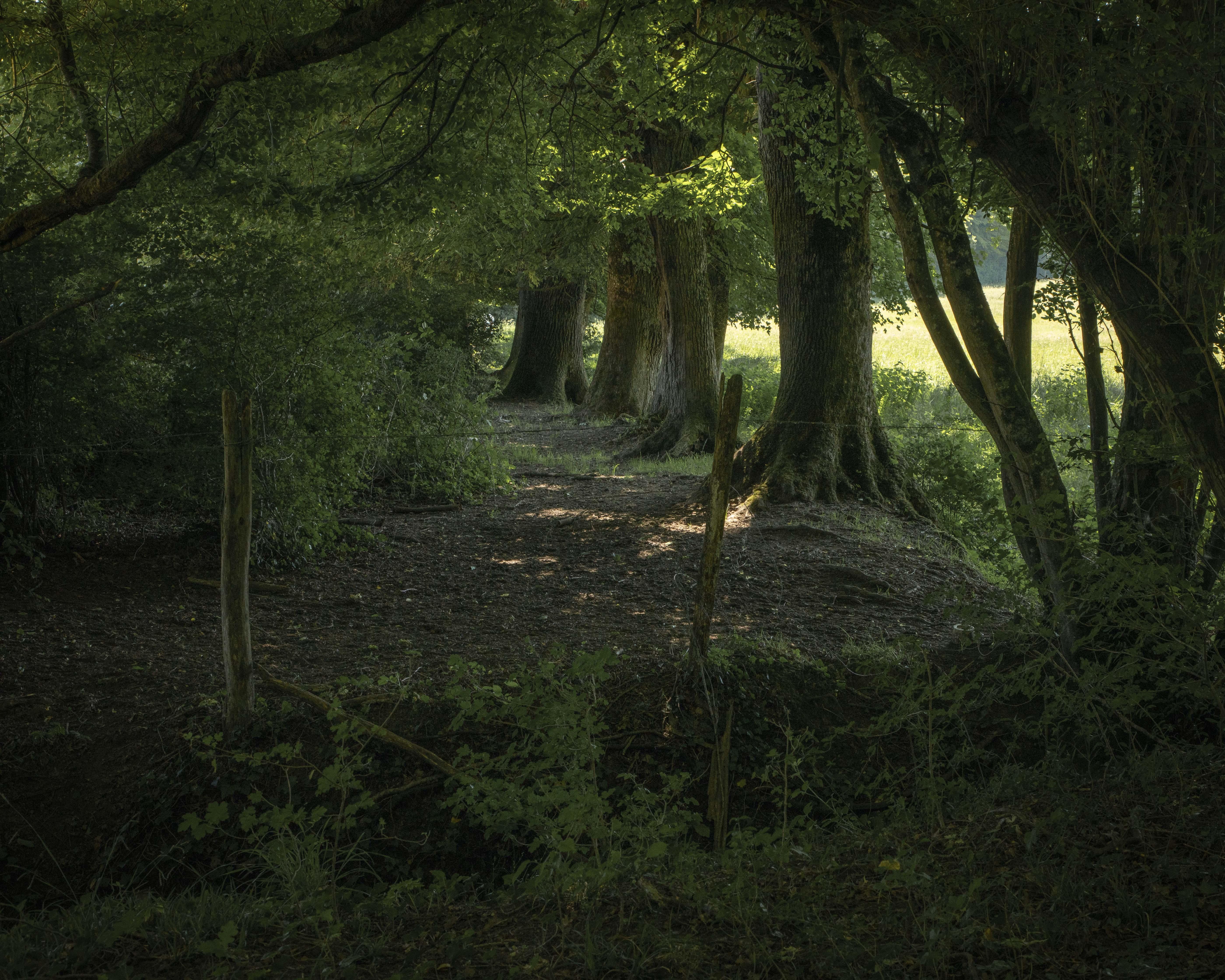 01 - Saint-Cyr-les-Menthons - Bois Paradis