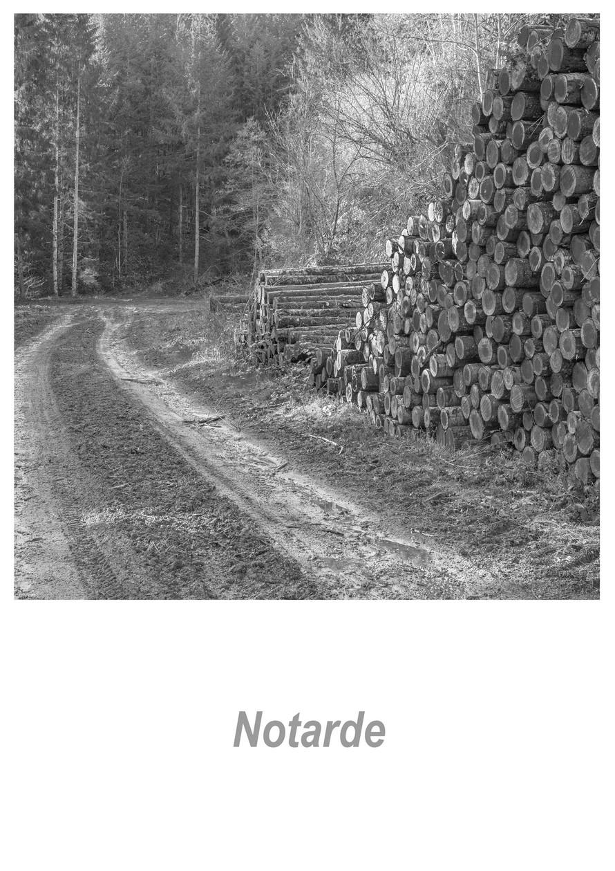 Notarde 1.1w.jpg