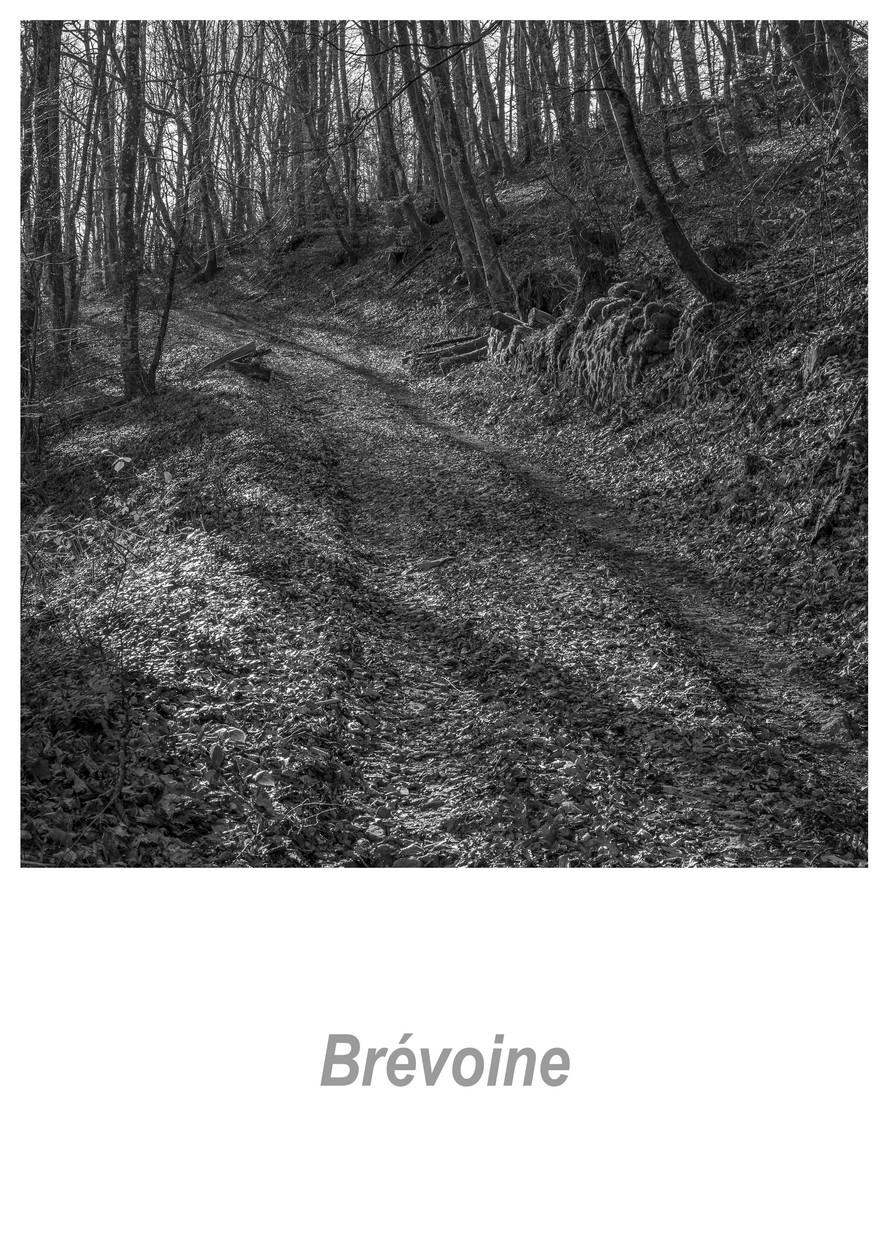 Brévoine_1.2w.jpg