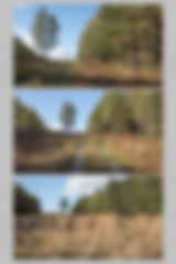 Planche 8.1w.jpg