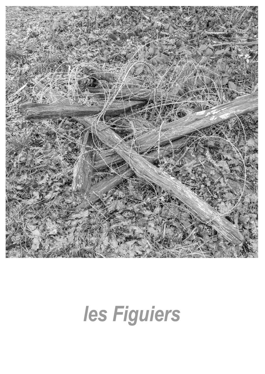 les Figuiers 1.1w.jpg