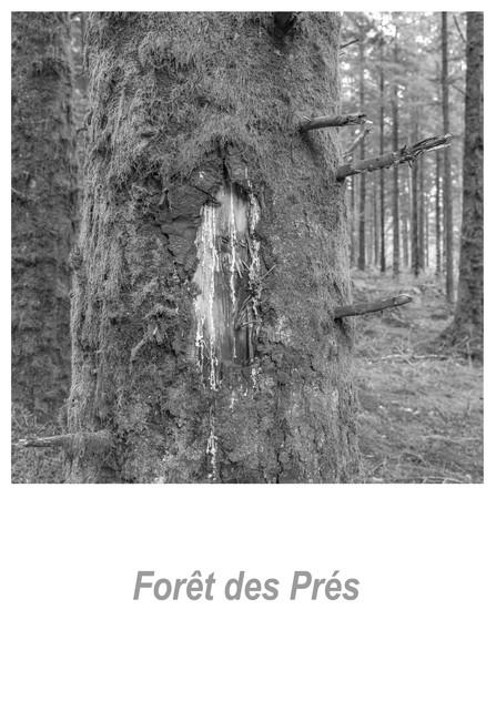 Forêt des Prés 1.2w.jpg