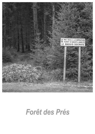 Forêt des Prés 1.5w.jpg