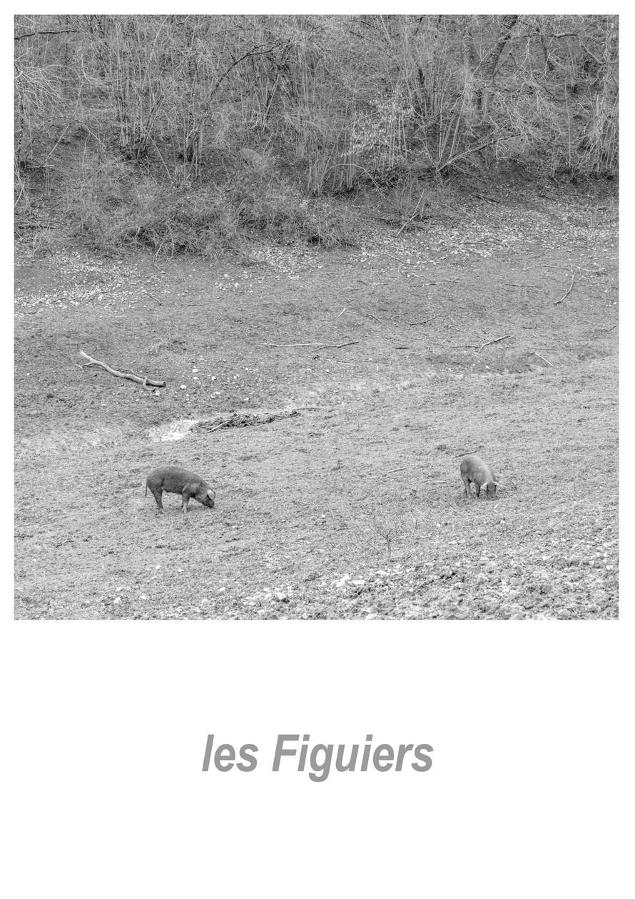 les Figuiers 1.2w.jpg