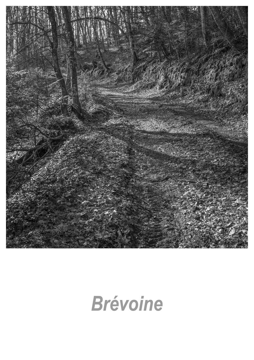 Brévoine_1.3w.jpg