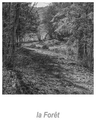 la_forêt_1.6w.jpg