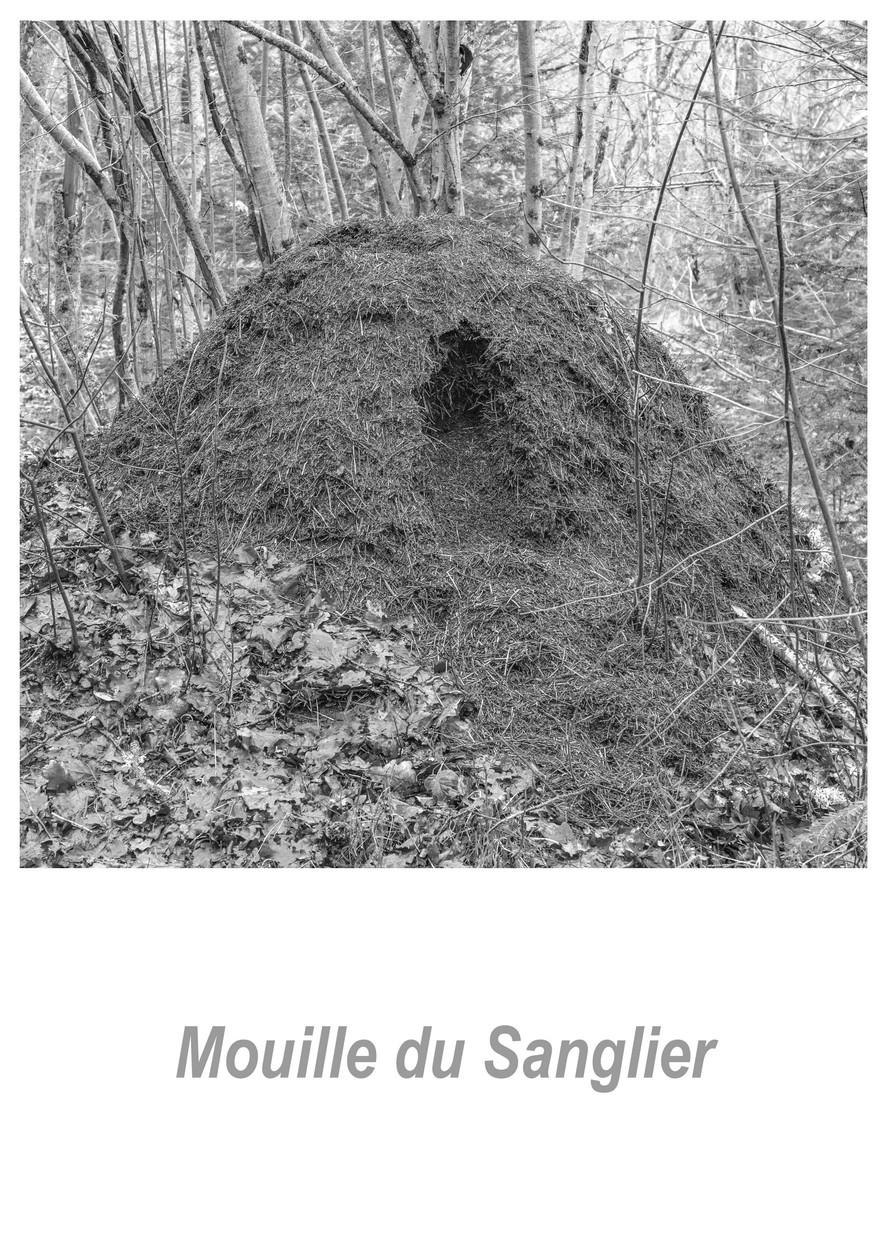 Mouille du Sanglier 1.6w.jpg