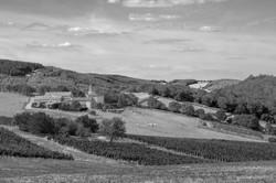 Entre-vignes-et-vaches---Azé---4927-nbw