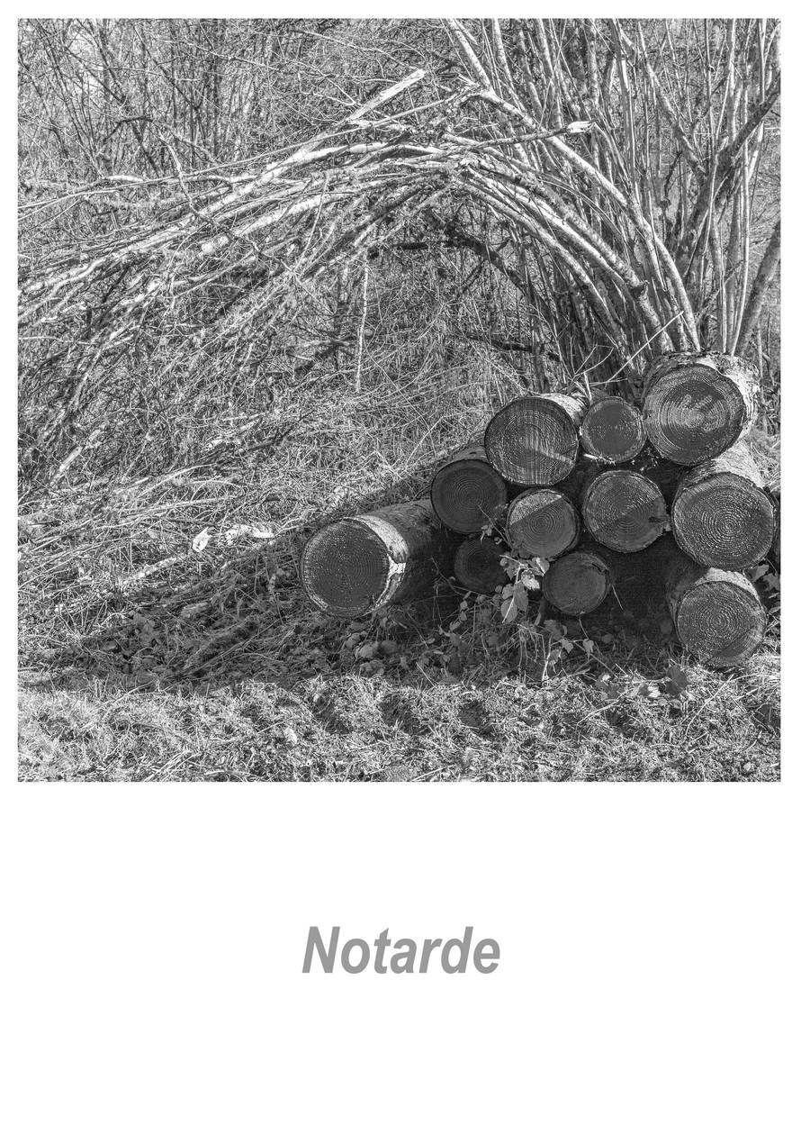Notarde 1.5w.jpg