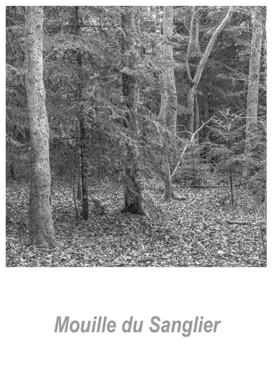 Mouille du Sanglier 1.4w.jpg