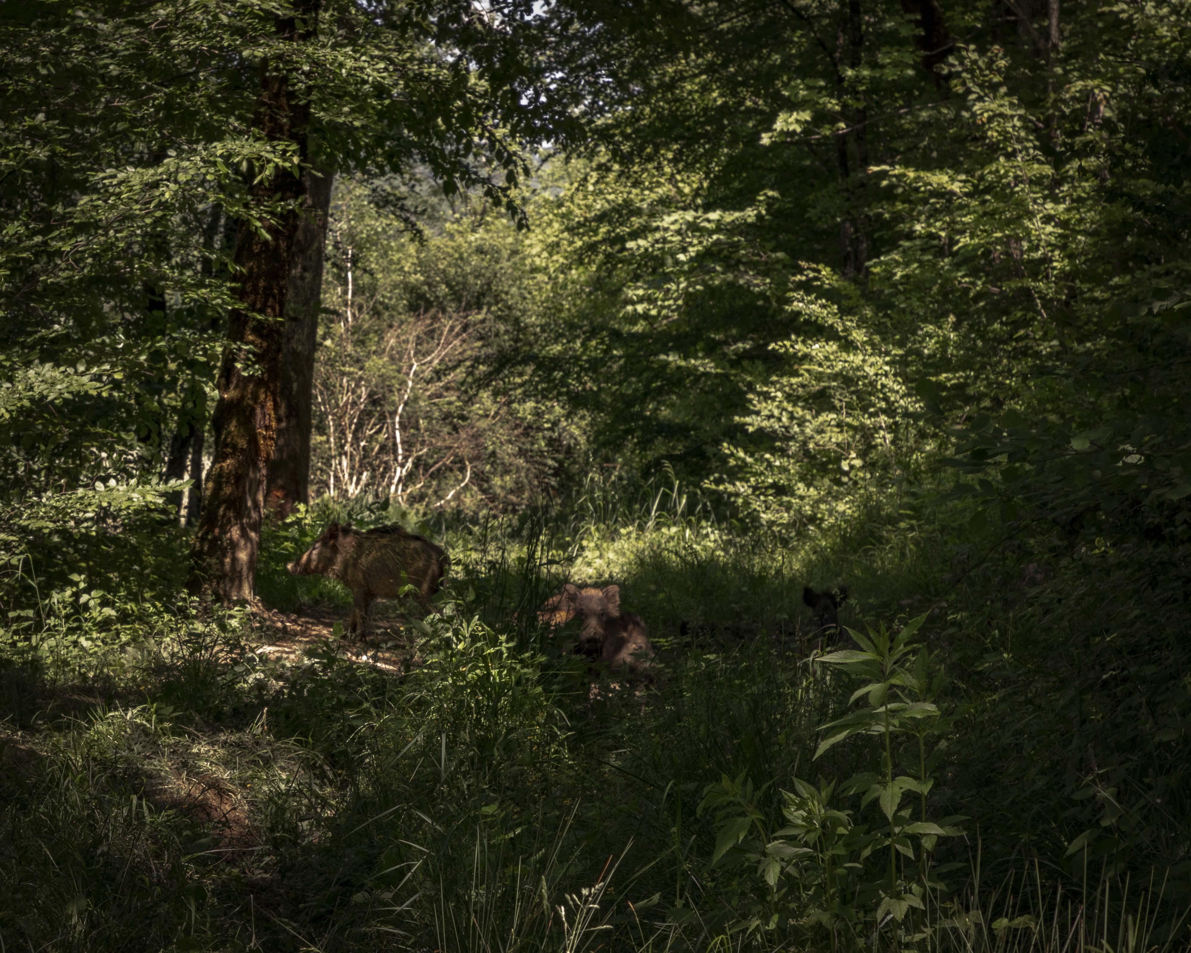 39 - Cressia - Le bois de paradis
