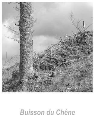 Buisson_du_Chêne_1.2w.jpg