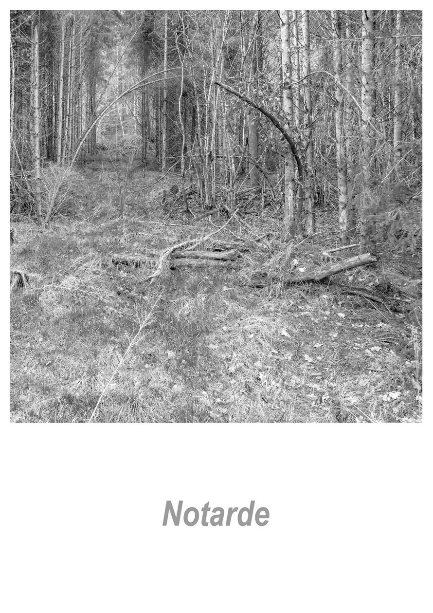 Notarde 1.8w.jpg