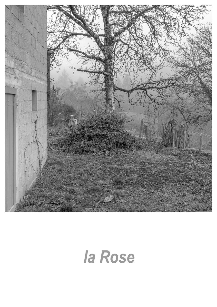 la Rose 1.3w.jpg