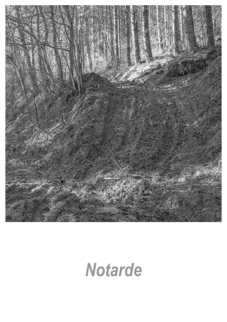 Notarde 1.3w.jpg