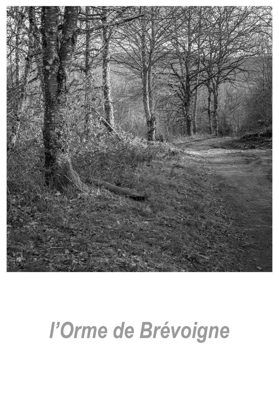l'Orme de Brévoigne 1.6w.jpg