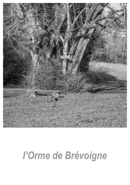 l'Orme de Brévoigne 1.3w.jpg