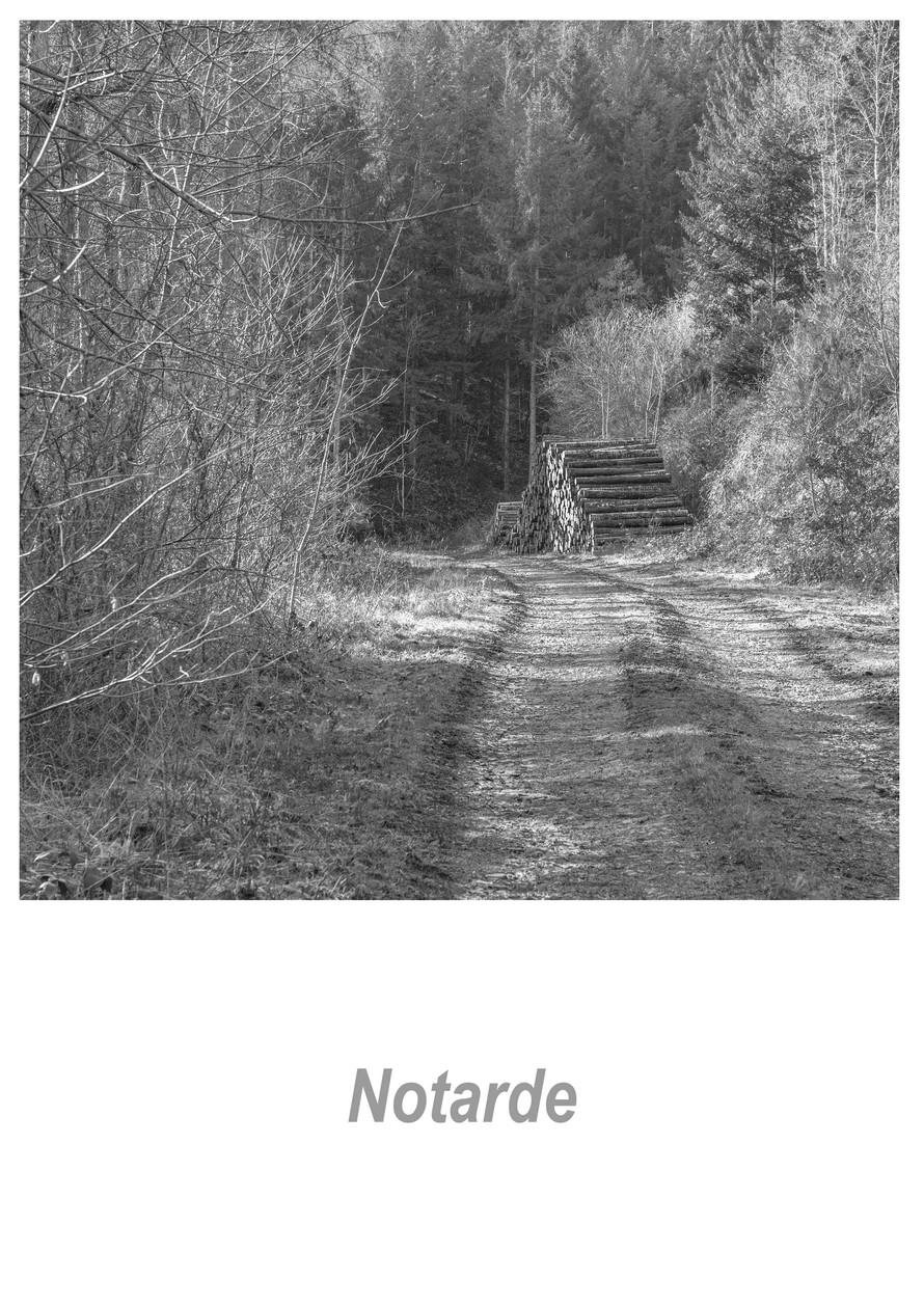 Notarde 1.2w.jpg
