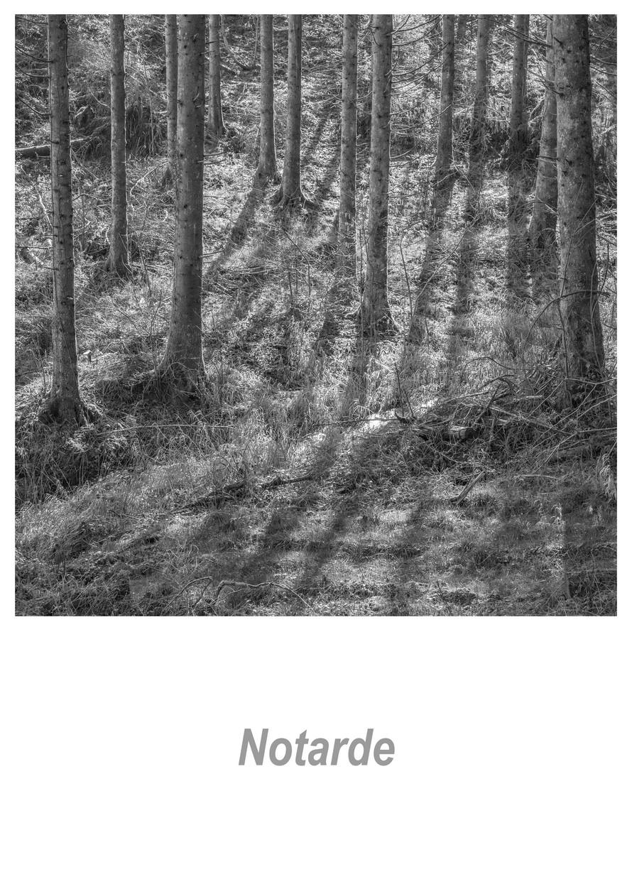 Notarde 1.4w.jpg