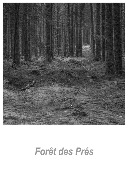 Forêt des Prés 1.3w.jpg